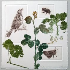 Fine art print. Drypoint Thrush, Bee and Skipper butterfly with monoprint plants from Hedgerow series