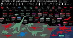 UrStoryZ- The post A guide to the teeth of 25 dinosaurs and other prehistoric creatures. appeared first on UrStoryZ. Funny pics, memes, infographics and gifs. A guide to the teeth of 25 dinosaurs and other prehistoric creatures. Prehistoric World, Prehistoric Creatures, Continents And Oceans, All Dinosaurs, Dinosaur Pictures, Recent Discoveries, Dinosaur Fossils
