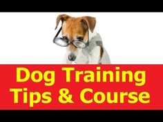 Learn how to train a dog at home. Dog training tips.