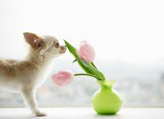Aromaterapia para o seu bichinho de estimação: Saiba como utilizar óleos essenciais em animais de forma segura.