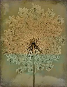 seed head - Queen Anne's Lace