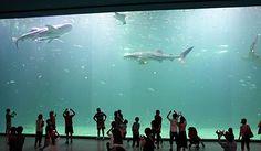 aquarium in jeju korea- must go one day