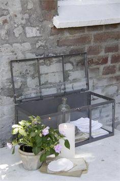 .for the terrarium