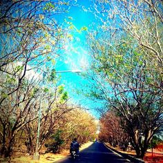 On the road to El Tari Airport in Kupang, Indonesia