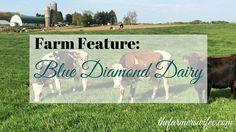 Farm Feature: Blue D