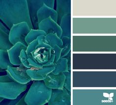 Home Color Palette Green Design Seeds 48 Ideas Paint Schemes, Colour Schemes, Color Combos, Teal Colors, Paint Colors, Turquoise Color, Cactus E Suculentas, Inspiration Design, Color Palate
