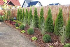 Grasses and shaped shrubs