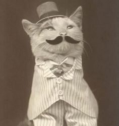 Cats in clothes pretty little peculiar vintage cats
