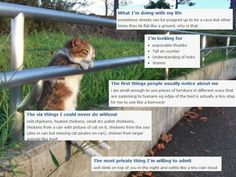 If cats had online dating profiles...