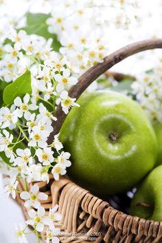 Spring Green Apple