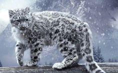 Snow Leopard http://t.co/6yMxGsCEVG