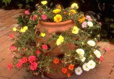 I did this, but with a small strawberry planter. The Portulaca Grandiflora bloo… - Modern Portulaca Flowers, Portulaca Grandiflora, Planting Flowers, Love Garden, Easy Garden, Garden Pots, Garden Ideas, Container Plants, Container Gardening