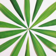 Palm pattern | @telmoestevao | VSCO