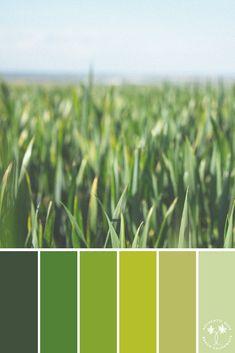 color psychology and color therapy Paint Color Schemes, Colour Pallette, Color Combos, Color Harmony, Color Balance, Interior Wall Colors, Colours That Go Together, Web Colors, Color Psychology
