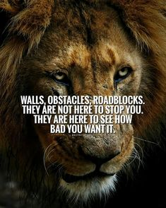 497 Best LION QUOTES images in 2019 | Quotes motivation