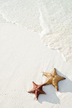 Starfish on Tropical Beach - Mehmed Zelkovic