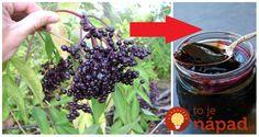Naplánujte si aj zber plodov bazy čiernej. Do košíka si vkladajte len úplne tmavé kúsky. Pomôžte si pritom vidličkou. Majú zázračné účinky na naše zdravie, ktoré sa skutočne oplatí poznať. Čo obsahujú plody vitamín C (87%), B a A draslík, železo, beta karotény éterické oleje (uvoľňujú hlien z tela) izoflavonoidmi, čo sú prirodzené antioxidanty flavonoidy... Sweets, Fruit, Food, Syrup, Gummi Candy, Candy, Essen, Goodies, Meals