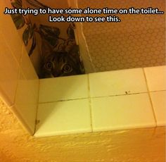 Cat owners do not have alone time on the toilet.  I believe the same goes for owners of very small humans.