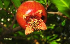 Image result for tree with fruit and flower