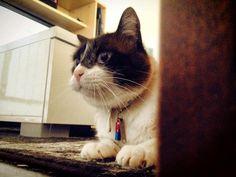 L'attenzione del gatto