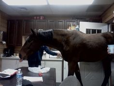 Mounted Patrol Police Horse takes over the breakroom. Look above the door at the barn cat watching the whole thing happen! :)