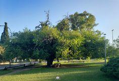 vista de uno de los tantos arboles con que contamos los vecinos de esta bella comunidad de Ranelagh Bella, Sidewalk, Buenos Aires, Community, Parks, Walkway, Walkways