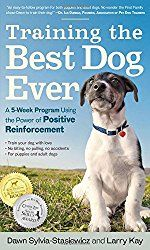 Some elementary obedience training causes dogs more pleasurable to be with – we are very mindful of that. It has some other, not so apparent obvious advantages – things a lot of us have no idea. Obedience training assists your dog