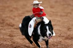 Maybe while you watch this cowboy monkey ride a dog.