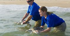 SeaWorld Orlando returned three endangered sea turtles to the Canaveral National Seashore on Thursday morning.
