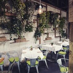 Looking lush at the Westport cafe, caught by @myscandinavianhome. #terraindigs