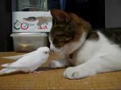 Bird wakes a kitten! The cuteness, it can't be contained.