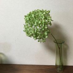 Instagram media by saeko.07 - アナベルのドライ。ここまでは成功なんだけど、綺麗なグリーンがいつまでもってくれるかな‥‥? *・゜・*:.。..。.:*・*・゜・*:.。..。.:*・*・゜・*:.。..。.:*・ #アナベル#ドライフラワー #津村里佳 #giggy2#花のある暮らし