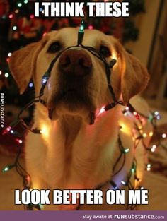 Looking mighty bright this Christmas