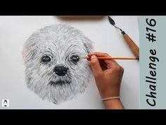 Painting my DOG (pet portrait) - How to paint fur | 2020 Art Challenge #16 - YouTube Painting Fur, Pet Dogs, Pets, Art Challenge, Pet Portraits, Bird, Drawings, Youtube, Animals