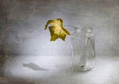 Кленовый лист... - null