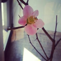 Happy Chinese New Year too! Thank you so much for this beautiful cherry blossom! Nenita Dejuras, you are the best Client, Friend and Agent!