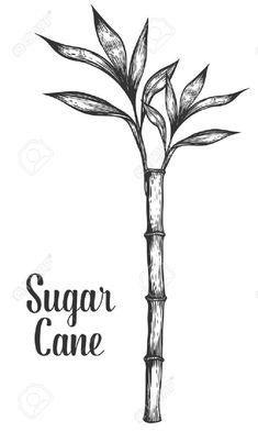 planta de caña de azucar para dibujar - Buscar con Google Logo Vintage, Tatting, Packaging, Google, Home Decor, Tatoo, Skeleton Tattoos, Christmas Quilting, Adorable Couples