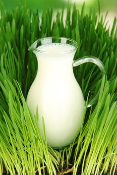 Milk is good for the garden. Using milk as fertilizer has been an old-time remedy in the garden for many generations. Find out how to take advantage of the beneficial fertilizer components of milk in this article. List Of Vegetables, Organic Gardening Tips, Gardening Hacks, Balcony Gardening, Flower Gardening, Vegetable Gardening, Natural Pesticides, Fertilizer For Plants, Pot Plante