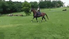 Dzcbymoaqogt2xh5etfc hesitant horse