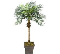 TWO 5.5' Date Phoenix Artificial Tropical Palm Trees, with No Pot, >>> Want additional info? Click on the image.