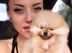 Pomeranian boo fiyatları  köpek fiyatları   satılık köpek #Pomeranian #boo #fiyatları  #köpek #satılık Pomeranian Spitz, Pomeranian Boo, Wine Glass Set, Best Laptops, Seo Marketing, Easy Food To Make, Beautiful Landscapes, Custom Jewelry, Landscape Design