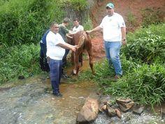 Cavalo cai em barranco e é resgatado pela equipe do canil municipal e atiradores do TG -   Na manhã desta terça-feira, 23, dois atiradores do Tiro de Guerra de Botucatu voltavam da instrução, quando avistaram um cavalo que caiu próximo a um rio perto do SESI. Logo que viram o animal, os jovens correram para ajudá-lo a não se afogar e constataram que ele estava com vários ferimentos.  - http://acontecebotucatu.com.br/geral/cavalo-cai-em-barranco-e-e-resgatado-pela-e