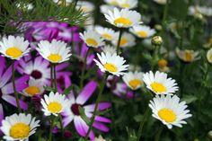 Kukkia. Kesä 2013.