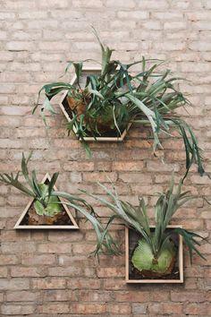 DIY // Geometric Staghorn Fern Boxes | Dulcet Creative Blog