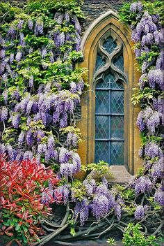 Wisteria Pergola Beautiful Ideas For 2019 Beautiful Gardens, Beautiful Flowers, Beautiful Places, Beautiful Dream, Simply Beautiful, My Secret Garden, Secret Gardens, Dream Garden, Windows And Doors