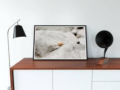 Limpet Wall Art Seashell Digital File Photography Summer