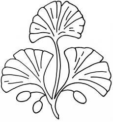 47 Best Ginkgo Designs Images Leaf Art