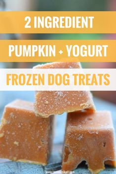 Frozen Pumpkin + Yogurt Dog Treats - Easy Dog Treats Recipe - Dog Treat Recipe - Healthy Dog Treat Recipe - Pet Tips - Communikait by Kait Hanson Frozen Dog Treats, Diy Dog Treats, Healthy Dog Treats, Puppy Treats, Healthy Food, Pumpkin Yogurt, Frozen Pumpkin, Canned Pumpkin, Homemade Dog Cookies