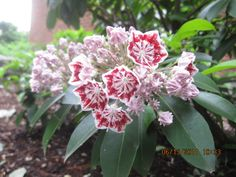 June 3, 2011 | Plants In Bloom - Plymouth State University