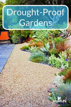 You can choose to landscape without grass! Gravel provides a low maintenance form of ground, you can even create mosaics by combining different types of rock in interesting patterns! [No Lawn Garden, Succulent Plants, Gravel, Landscaping Ideas, Drought Proof Plants, Drought Proof Landscaping, Garden Planning, Exterior Design Ideas]